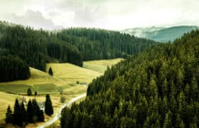 facts about the black forest