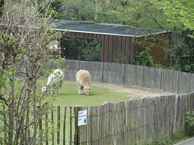 Aachener Tierpark Euregiozoo