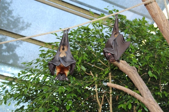 Wilhelma zoological-botanical gardens