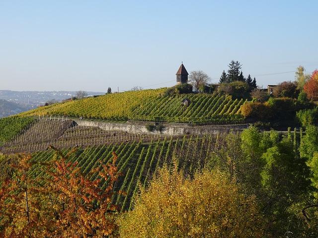 vineyard stuttgart